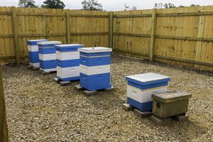 Bees-raised Garden Beds