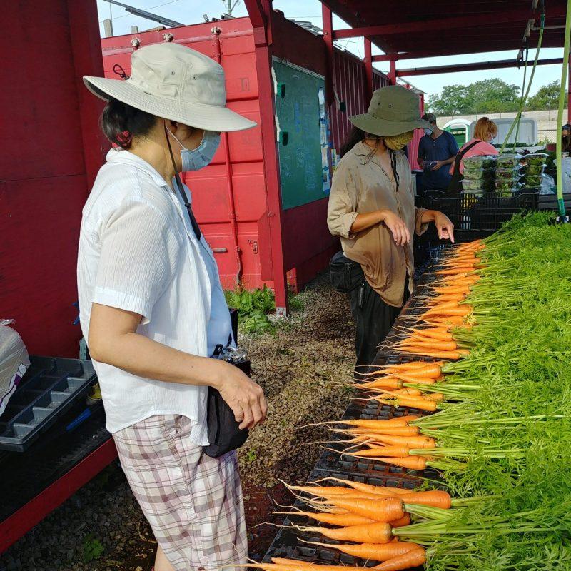 Processing Carrots